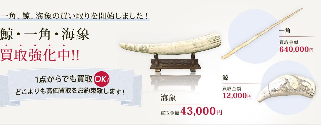 鯨・一角・海象・象牙