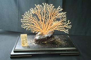 珊瑚買取 珊瑚原木 長野県松本市のお客様