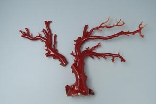 珊瑚買取 赤珊瑚原木 東京都のお客様