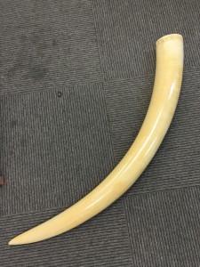 象牙買取 5.6kg