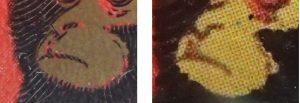 赤猿見分け方3