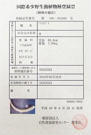 象牙 登録票