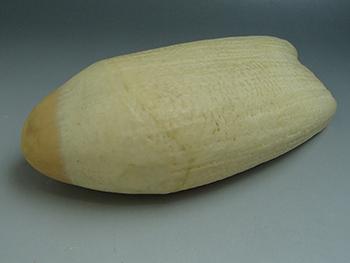 鯨歯 マッコウクジラ 彫刻・印材・根付用 745g 高価買取しました。千葉県のお客様