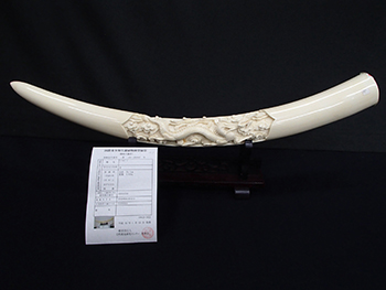 象牙の一本牙を高価買取! 彫刻は査定にどのような影響を及ぼす??