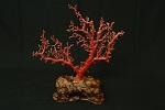 赤珊瑚原木買取